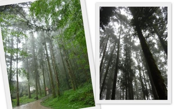 明池樹林.jpg