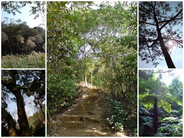 林口森林步道1.jpg