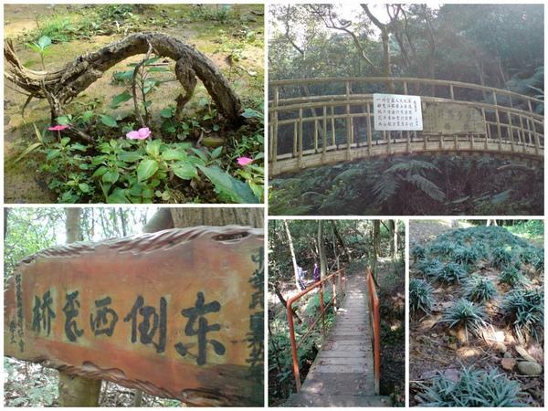 林口森林步道2.jpg