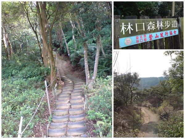 林口森林步道.jpg