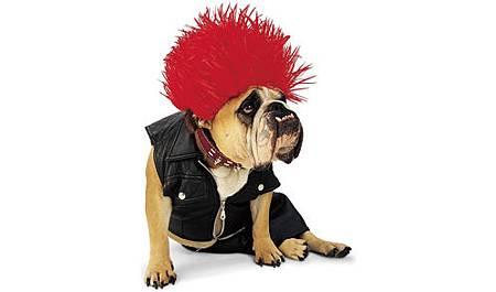 絕對讓你笑出來的寵物服裝介紹_3.jpg