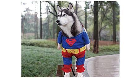 絕對讓你笑出來的寵物服裝介紹_4.jpg