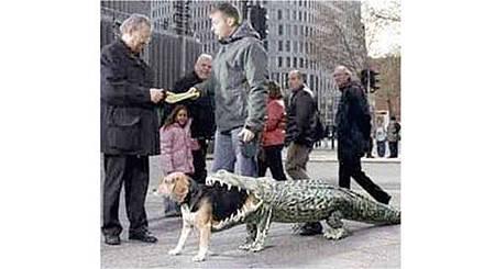絕對讓你笑出來的寵物服裝介紹_6.jpg