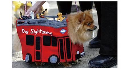 絕對讓你笑出來的寵物服裝介紹_8.jpg