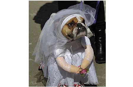 絕對讓你笑出來的寵物服裝介紹_9.jpg