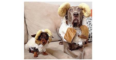 絕對讓你笑出來的寵物服裝介紹_10.jpg