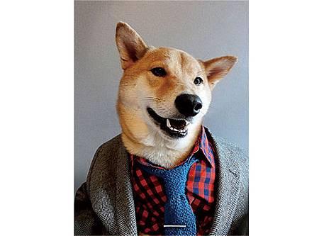 絕對讓你笑出來的寵物服裝介紹_11.jpg