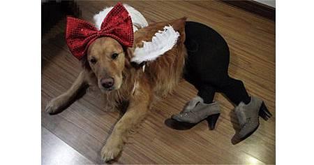 絕對讓你笑出來的寵物服裝介紹_13.jpg