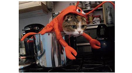 絕對讓你笑出來的寵物服裝介紹_15.jpg