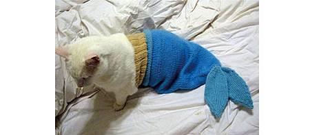 絕對讓你笑出來的寵物服裝介紹_17.jpg