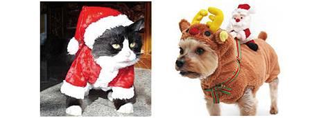 絕對讓你笑出來的寵物服裝介紹_20.jpg