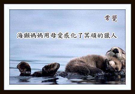 28 海獭媽媽用母愛