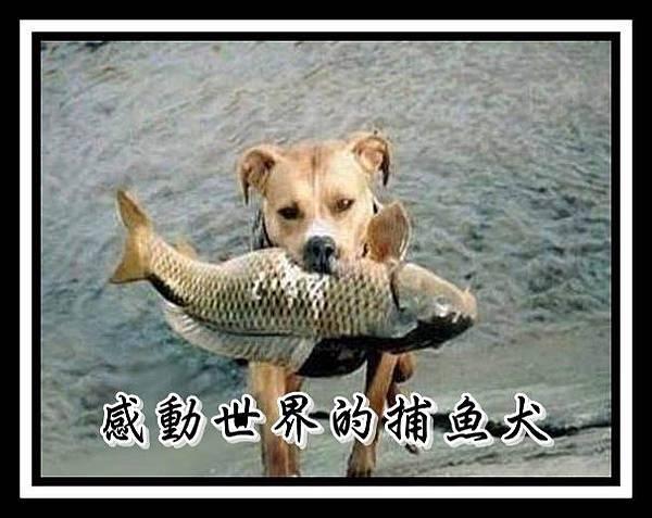 感動世界的捕魚犬