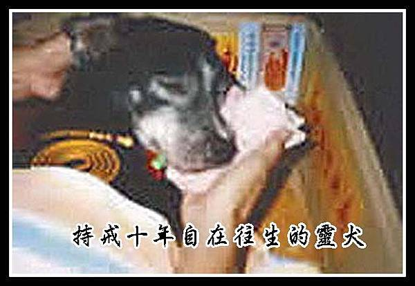 A靈犬持戒10年