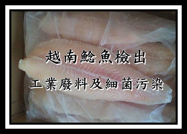 越南鯰魚少吃為佳