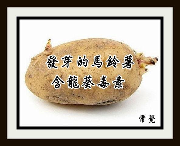 發芽馬鈴薯有毒