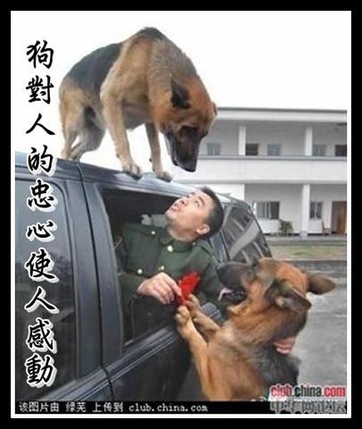 a狗對人的忠心使人感動