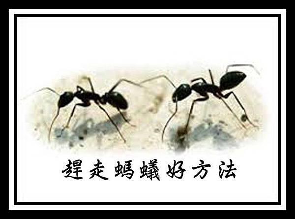 趕走螞蟻好方法