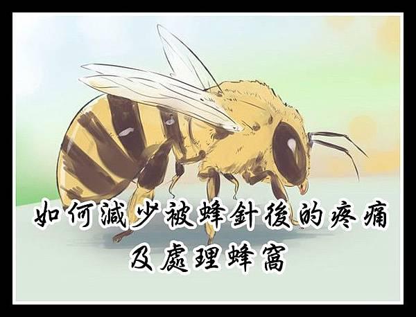 如何減少被蜂針後的疼痛及處理蜂窩