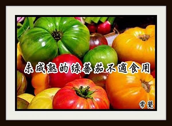 1未成熟的綠蕃茄