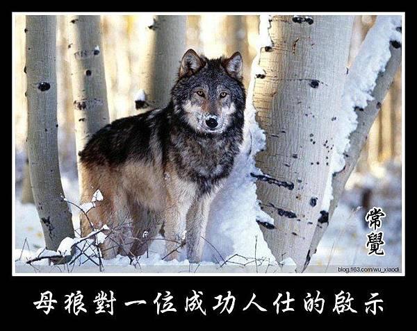 A 母狼的啟示