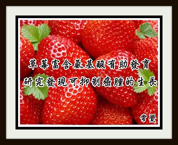 v草莓富含氨基酸