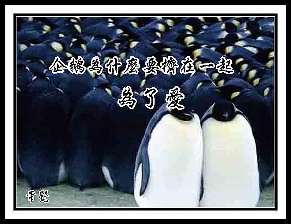 A1 企鹅以自己的身体
