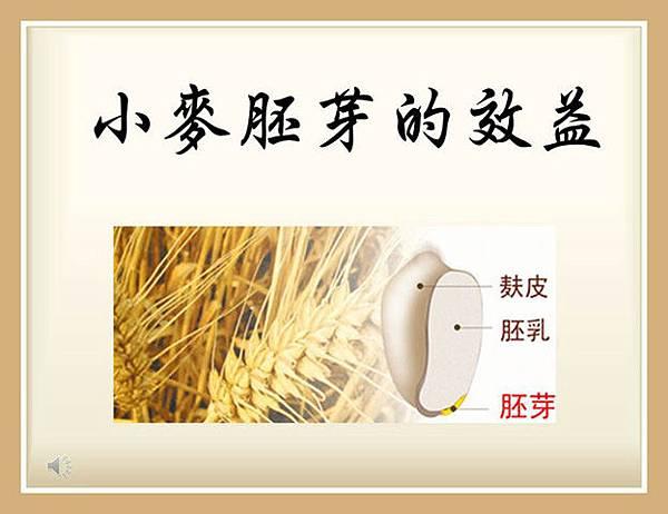 1小麥胚芽的效益r