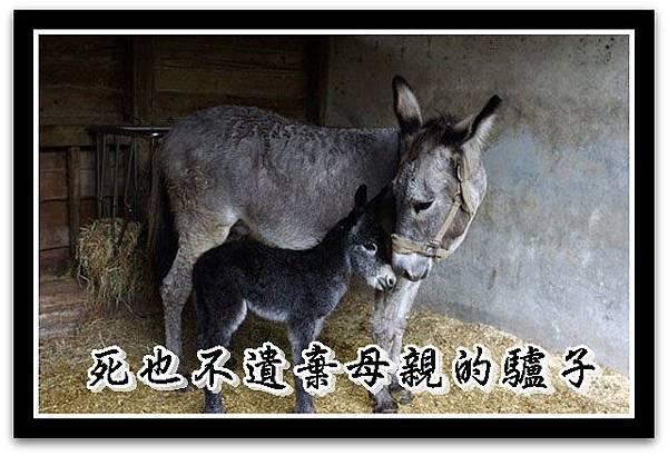 一隻小小的驢子r