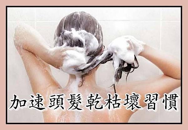加速頭髮乾枯壞習慣