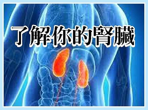 了解你的腎臟