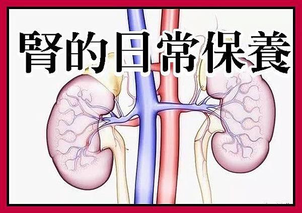 腎的日常保養