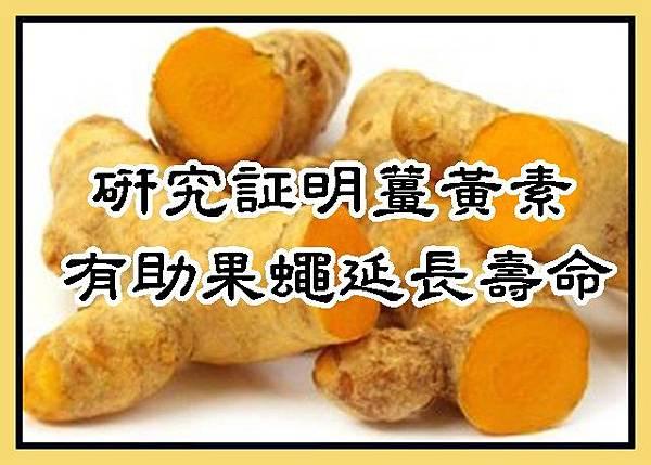 研究証明薑黃素有助果蠅延長壽命