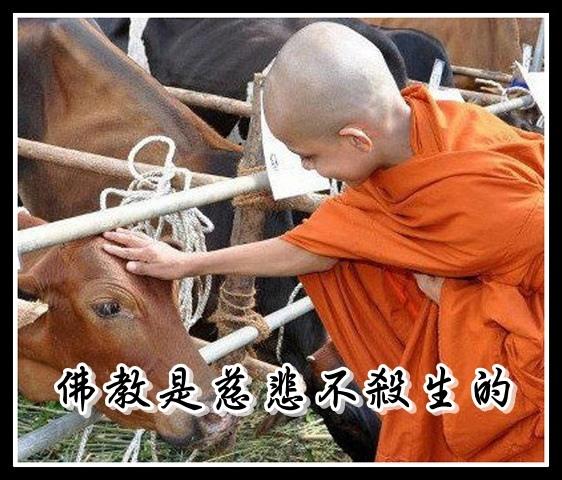 4c佛教是慈悲不殺生的.jpg