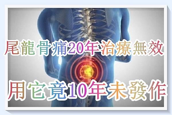 尾龍骨痛了20年治療無效,用了它竟10年未發作!(網友提供).jpg