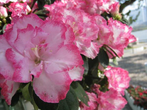 花開得挺美