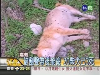 dog_news
