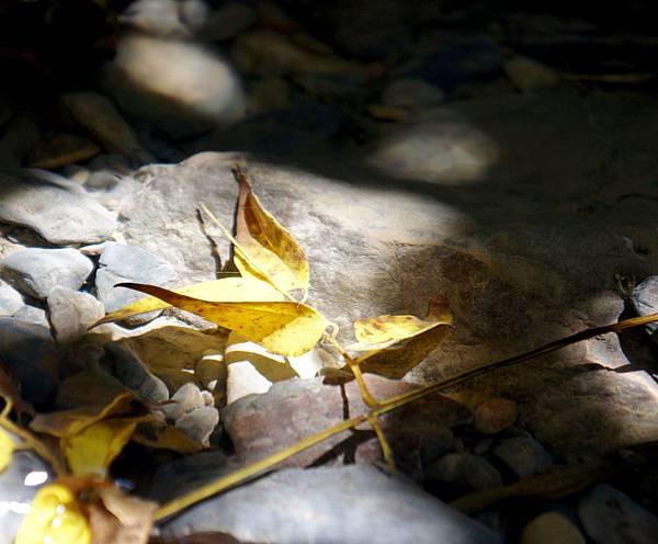 麻里巴~野溪的秋光