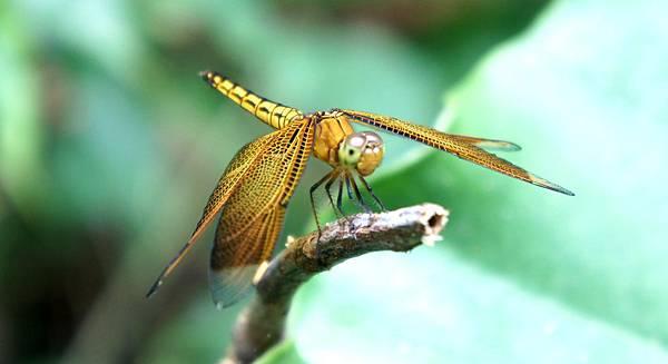 跟著昆蟲渡夏~滿州
