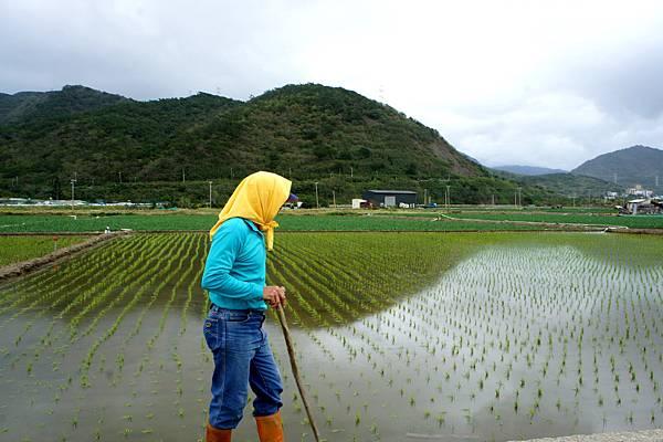 遠足~車城稻