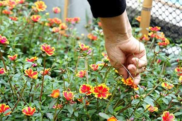 媽媽的花園~無尾巷~日光阿猴城