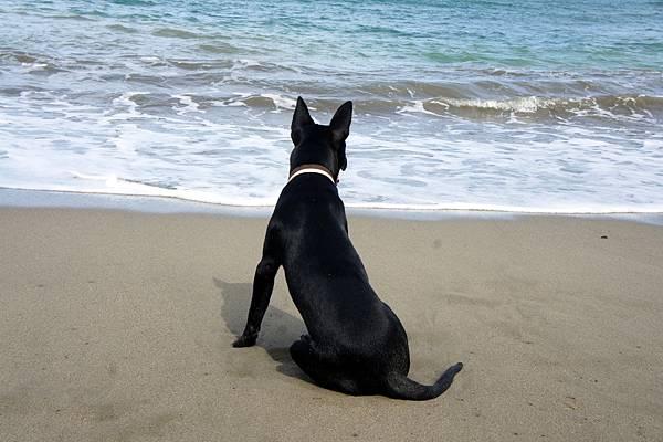 滿州~港口灣~潮浪的狗