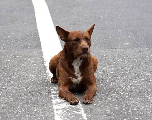 布農~南安的狗