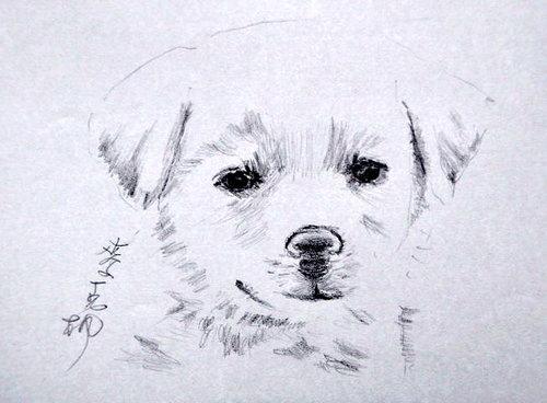 狗狗6.jpg