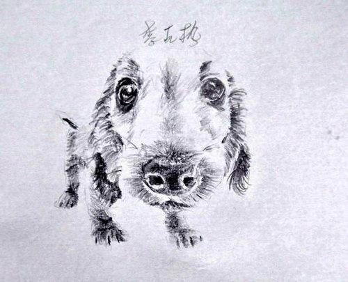 狗狗1.jpg