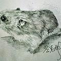 天竺鼠.jpg