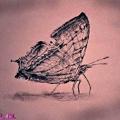 蝴蝶.jpg