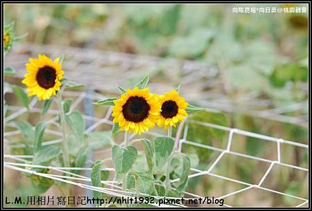 向陽農場08.jpg