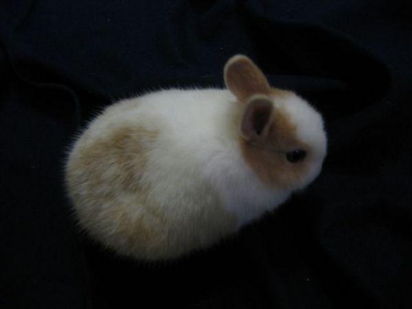小小兔有大屁股