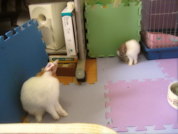 一起洗澡趴兔